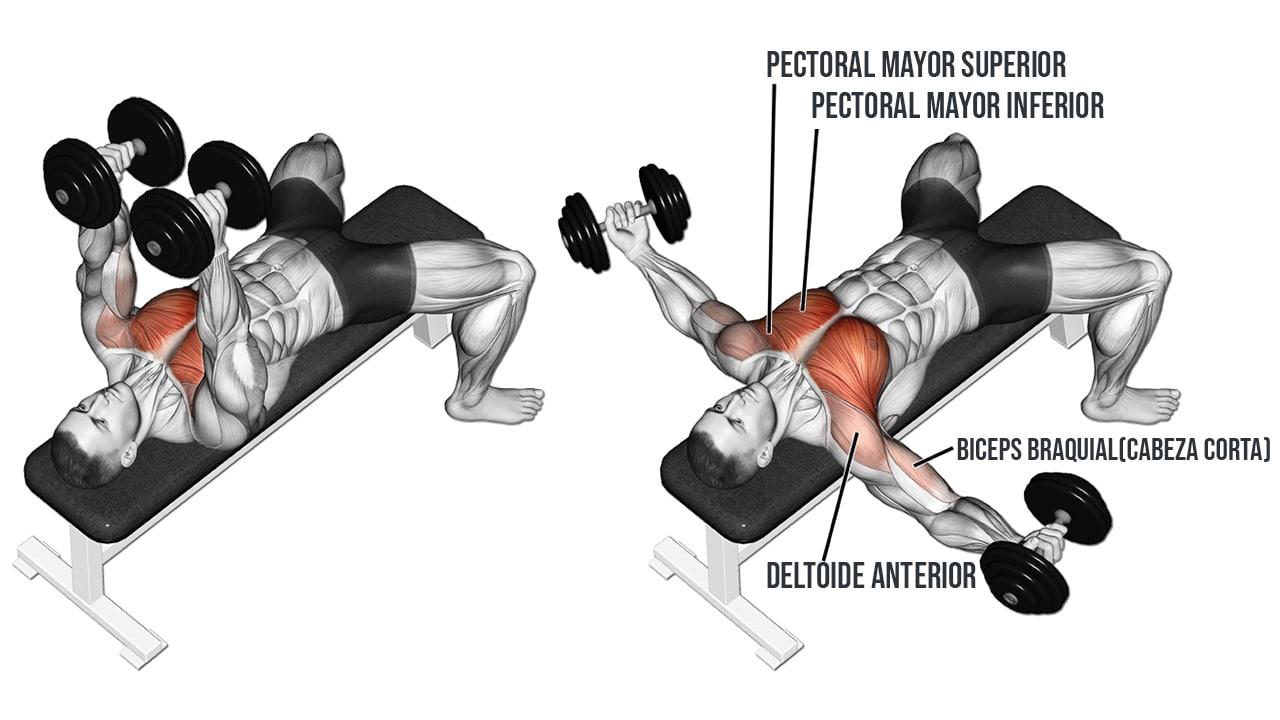 Aperturas con mancuernas en banco plano - Músculos involucrados