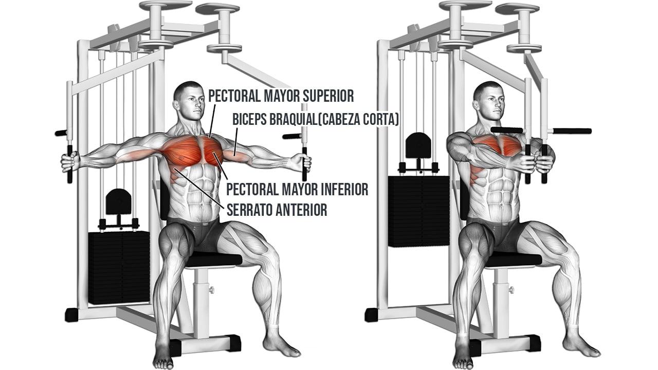 Aperturas en contractor de pecho - Músculos involucrados