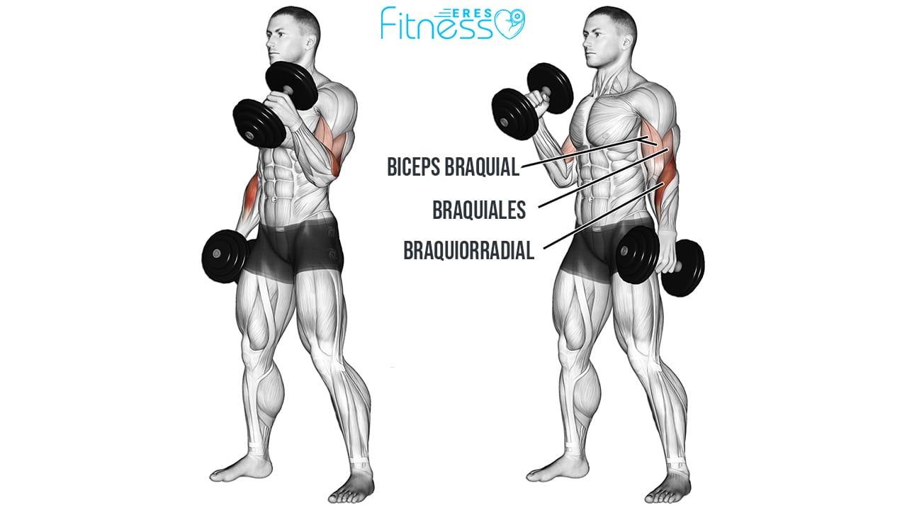 Curl Martillo músculos involucrados y técnica de ejecución