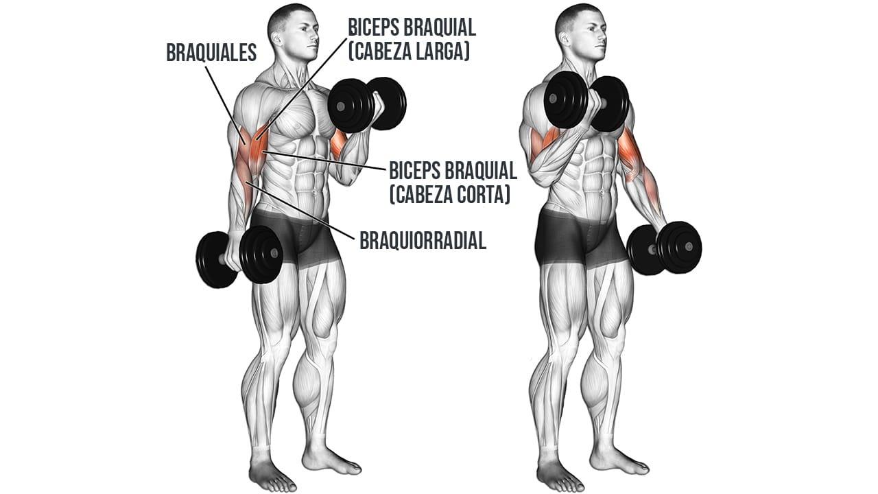 Curl alternado con mancuerna para Bíceps