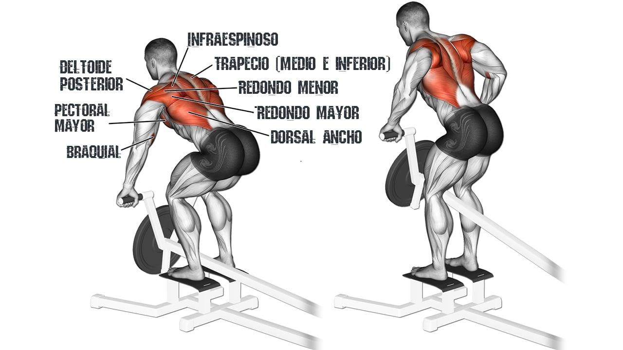 Remo con barra T - Musculos involucrados