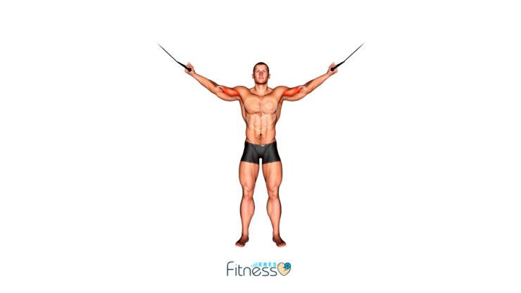 Bíceps, brazos en cruz en polea alta ¿Qué es y cómo hacerlo correctamente? Ejercicio de Bíceps en Gimnasio