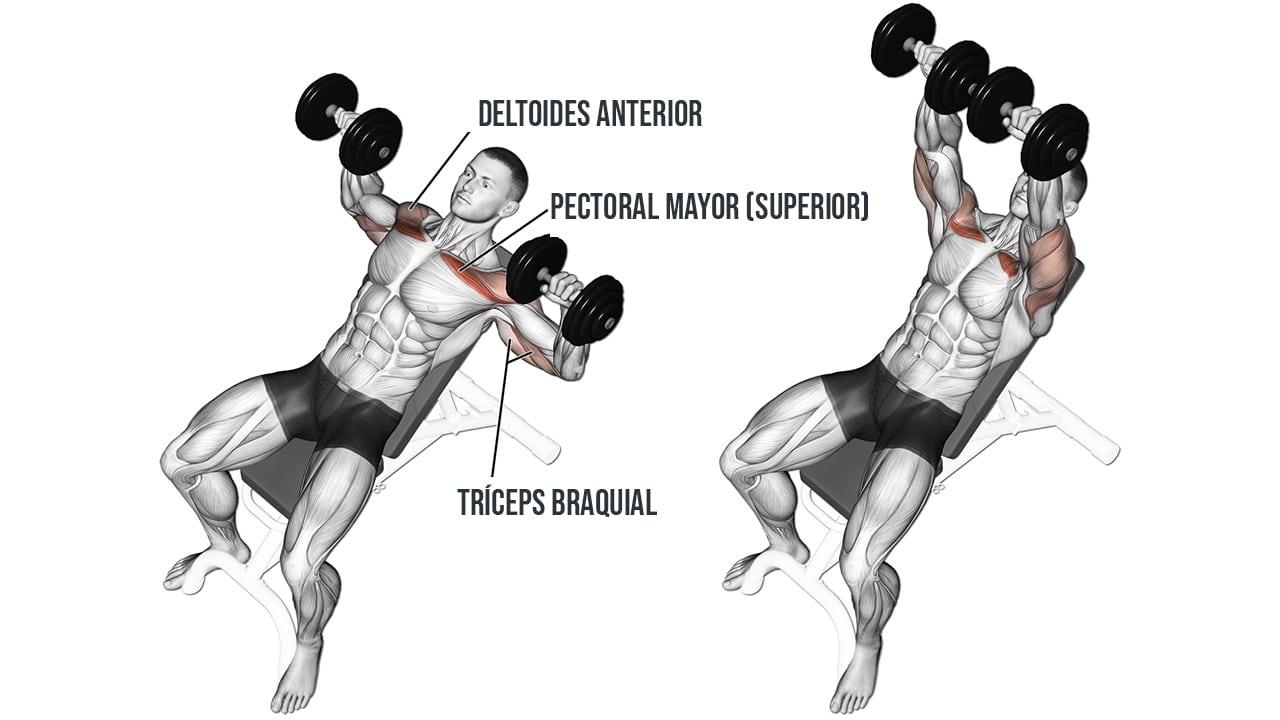 Press de banca inclinado con mancuernas - Músculos involucrados y cómo hacerlo correctamente