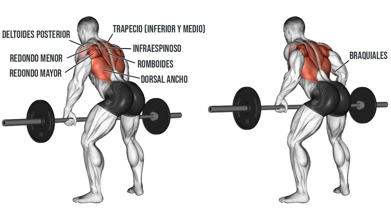Remo con barra recta de pie | Músculos implicados y ejecución del ejercicio