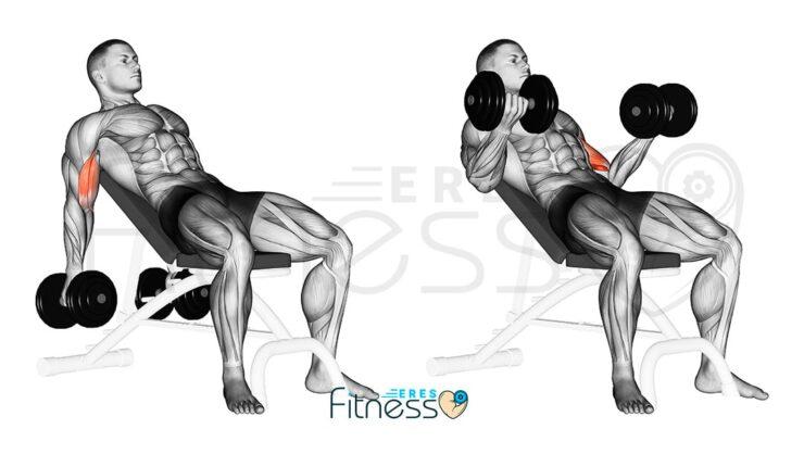 Curl bíceps inclinado con mancuerna
