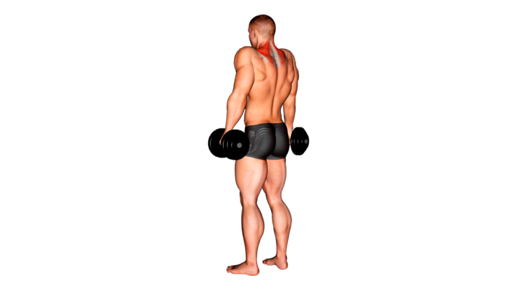 Encogimiento de hombros con mancuernas ¿Qué es y cómo hacerlo correctamente?