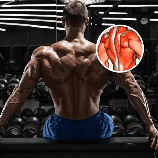 Los mejores ejercicios para Espalda en 2020