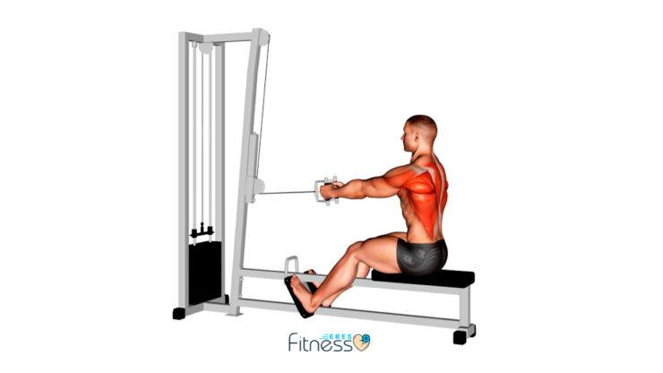Remo sentado en polea baja ¿Cómo hacer este ejercicio para espalda?