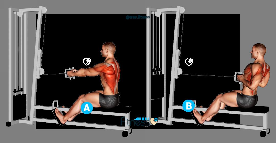 Remo en polea baja  sentado agarre estrecho ¿Qué es y qué músculos trabaja?
