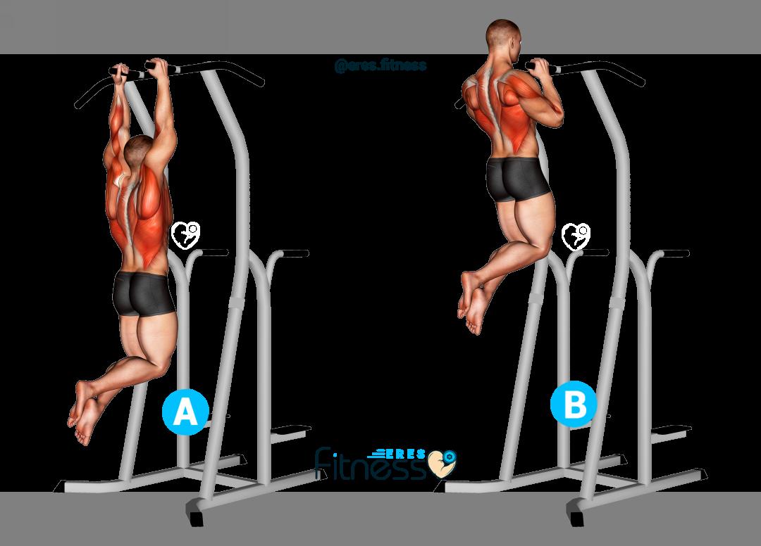 Dominadas agarre neutro ¿Qué es y Cómo hacer este ejercicio?