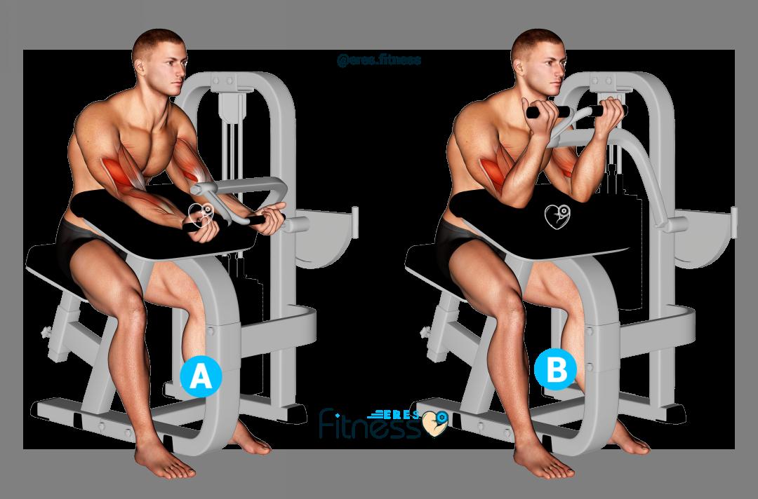 Curl de bíceps concentrado en máquina ¿Cómo hacerlo correctamente?