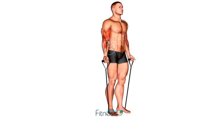 Curl de bíceps con banda elástica (Posición inicial)