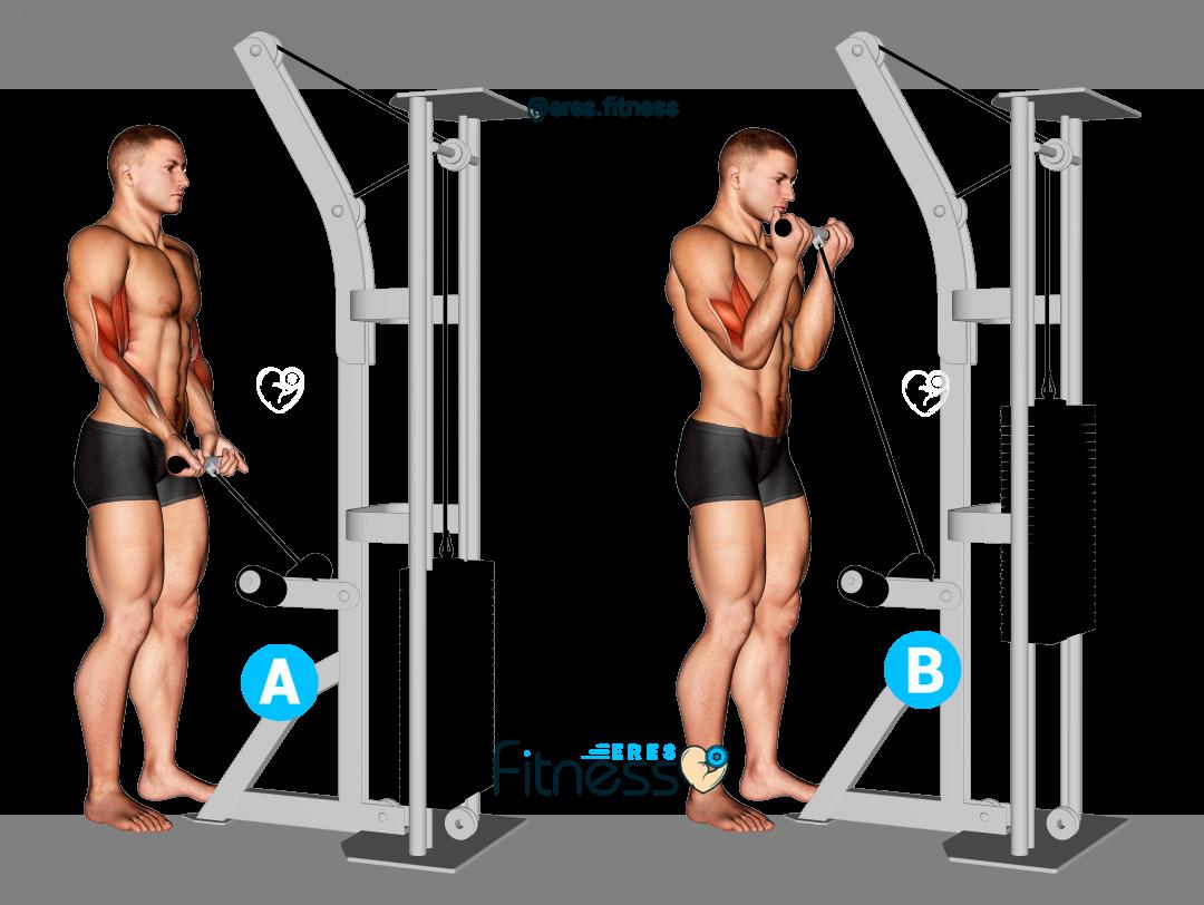 ¿Cómo hacer el curl de bíceps en polea baja?
