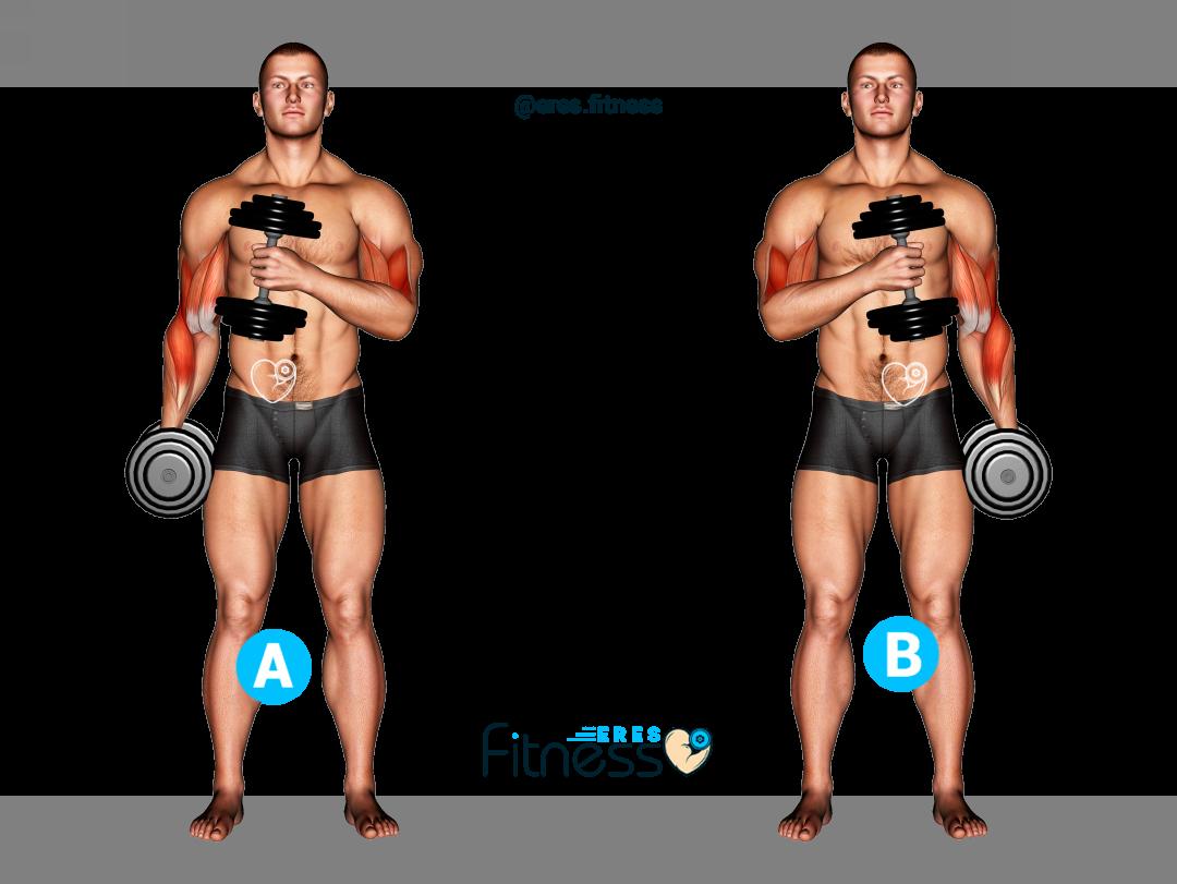 Curl de bíceps martillo cruzado con mancuernas ▷ ¿Cómo hacerlo correctamente?