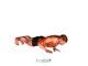 ▷ Flexiones de brazo cerradas 🏆 Ejercicios para brazos 2021